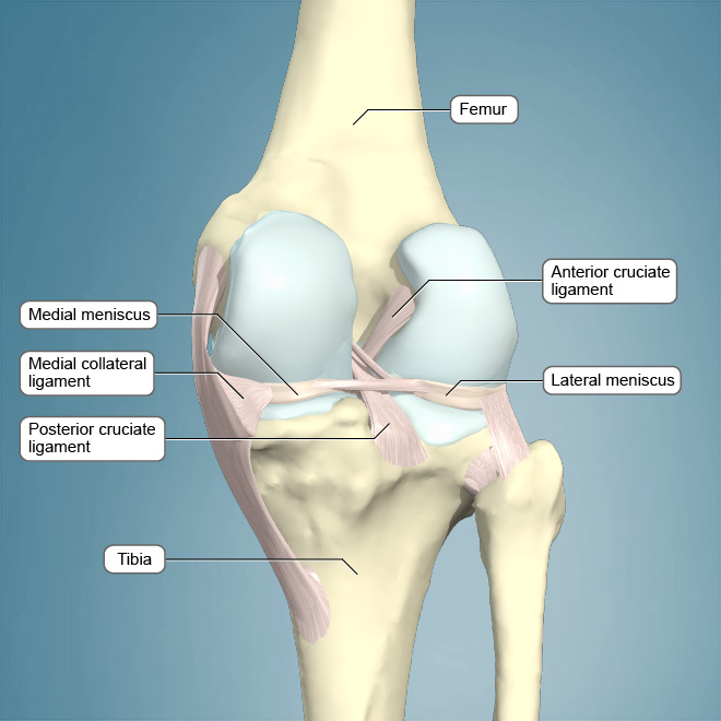 Anatomy Of An Injury Acl Injuries Article Ptonthenet