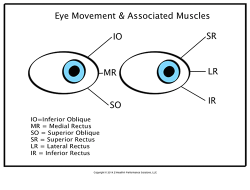 The Six Muscles to Include in Every Training Session | Article ...